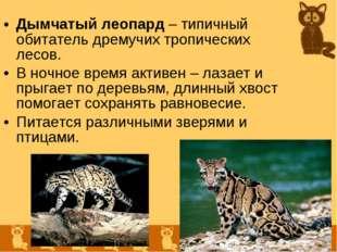Дымчатый леопард – типичный обитатель дремучих тропических лесов. В ночное вр