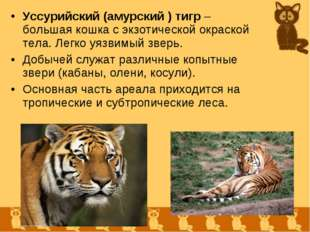 Уссурийский (амурский ) тигр – большая кошка с экзотической окраской тела. Ле
