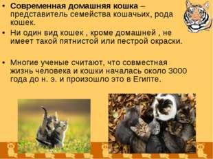 Современная домашняя кошка – представитель семейства кошачьих, рода кошек. Ни