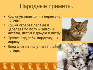 Народные приметы. Кошка умывается – к перемене погоды; Кошка скребёт лапами и