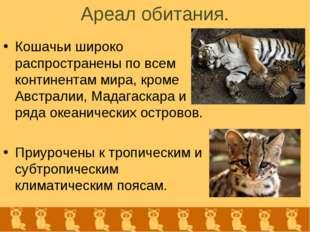 Ареал обитания. Кошачьи широко распространены по всем континентам мира, кроме