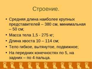 Строение. Средняя длина наиболее крупных представителей – 380 см, минимальная