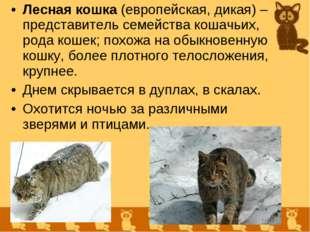 Лесная кошка (европейская, дикая) – представитель семейства кошачьих, рода ко