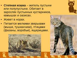 Степная кошка – житель пустыни или полупустыни. Обитает в зарослях пустынных