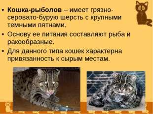 Кошка-рыболов – имеет грязно-серовато-бурую шерсть с крупными темными пятнами