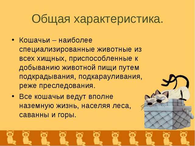 Общая характеристика. Кошачьи – наиболее специализированные животные из всех...