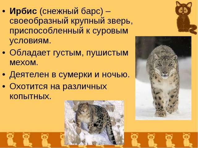 Ирбис (снежный барс) – своеобразный крупный зверь, приспособленный к суровым...