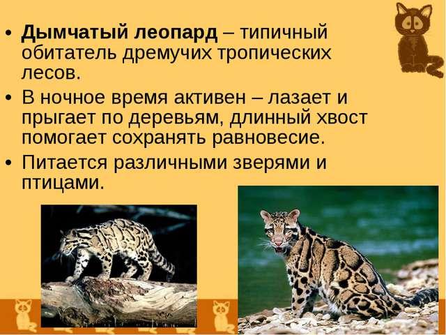 Дымчатый леопард – типичный обитатель дремучих тропических лесов. В ночное вр...