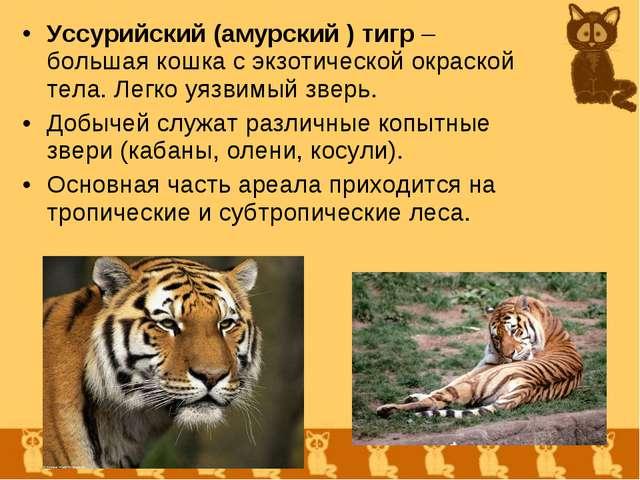 Уссурийский (амурский ) тигр – большая кошка с экзотической окраской тела. Ле...