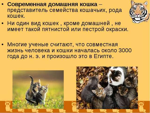 Современная домашняя кошка – представитель семейства кошачьих, рода кошек. Ни...