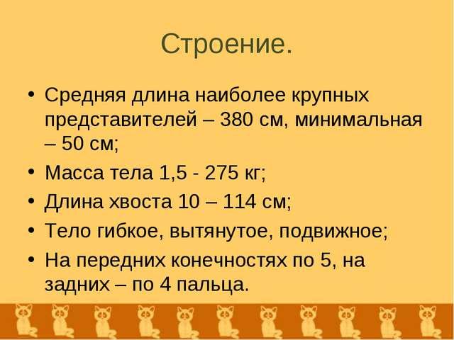 Строение. Средняя длина наиболее крупных представителей – 380 см, минимальная...
