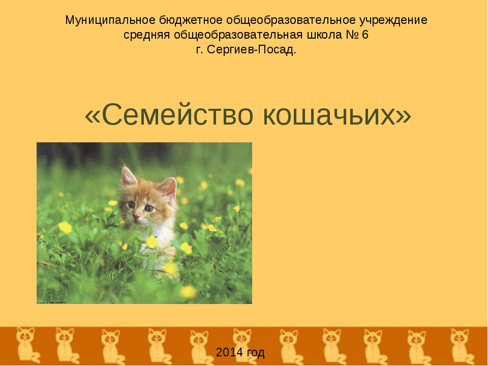 «Семейство кошачьих» Муниципальное бюджетное общеобразовательное учреждение с...