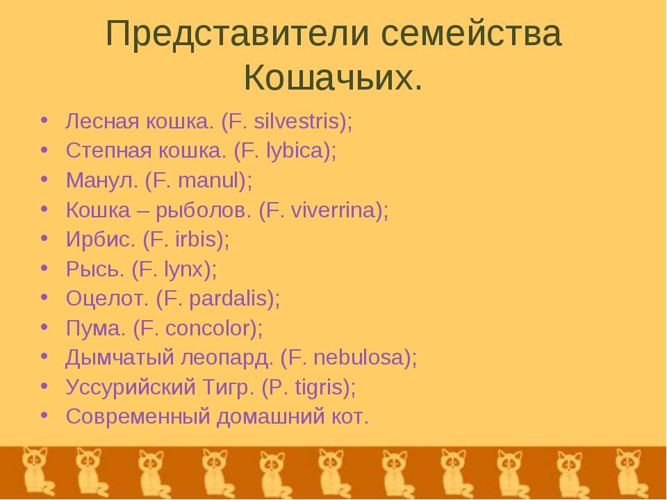 Представители семейства Кошачьих. Лесная кошка. (F. silvestris); Степная кошк...