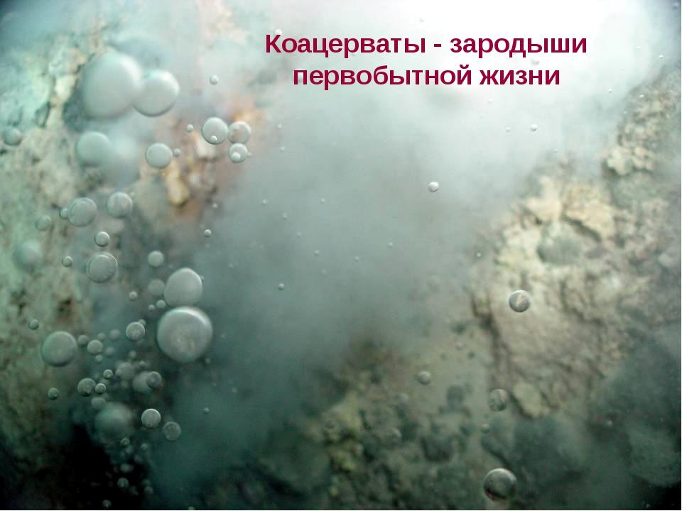Коацерваты - зародыши первобытной жизни