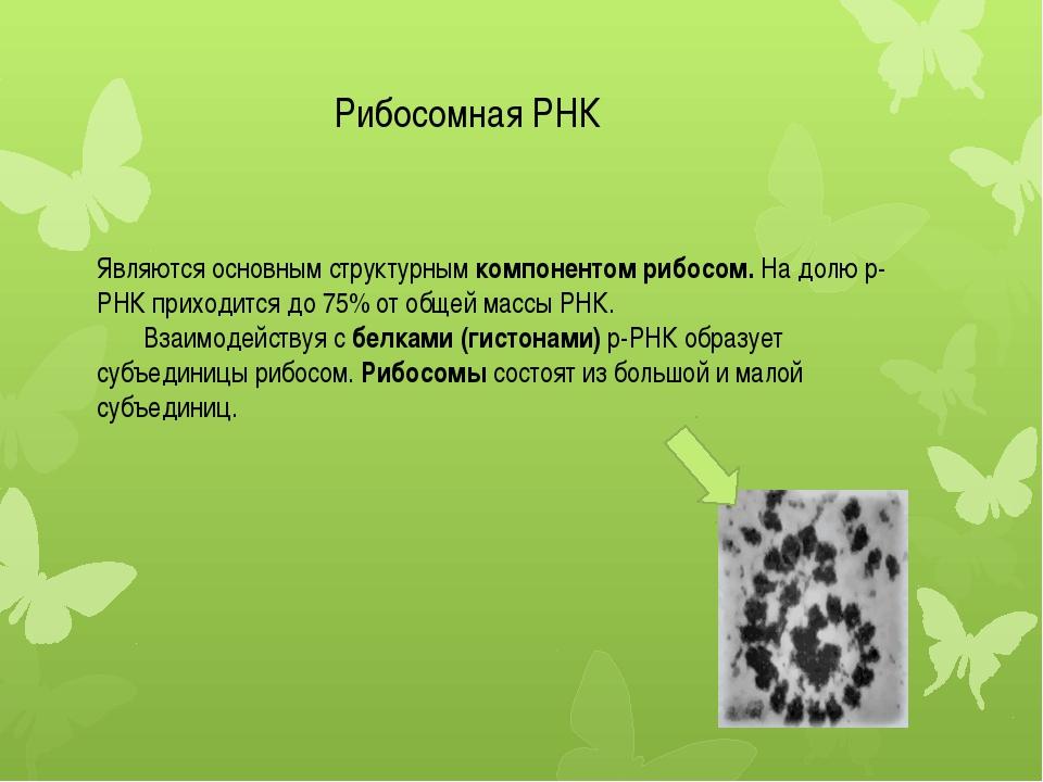 Являются основным структурным компонентом рибосом. На долю р-РНК приходится д...