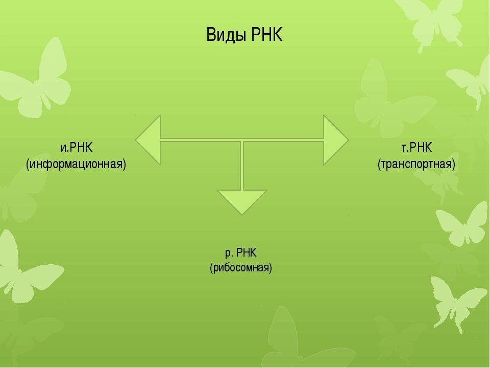 Виды РНК и.РНК (информационная) т.РНК (транспортная) р. РНК (рибосомная)