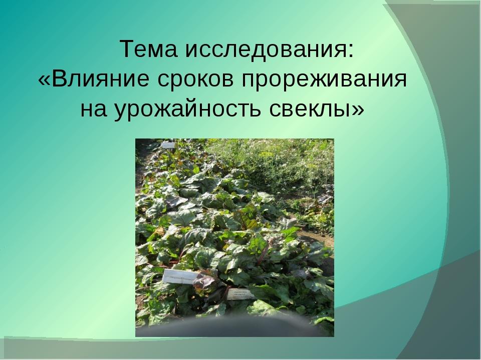 Тема исследования: «Влияние сроков прореживания на урожайность свеклы»
