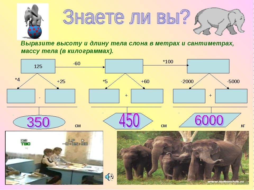 Выразите высоту и длину тела слона в метрах и сантиметрах, массу тела (в кило...