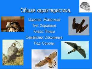 Общая характеристика. Царство: Животные Тип: Хордовые Класс: Птицы Семейство:
