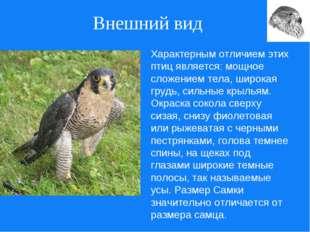 Внешний вид Характерным отличием этих птиц является: мощное сложением тела, ш
