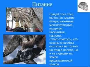 Питание Пищей этих птиц являются: мелкие птицы, наземные млекопитающие, ящери