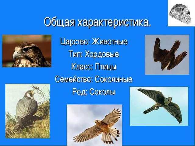Общая характеристика. Царство: Животные Тип: Хордовые Класс: Птицы Семейство:...