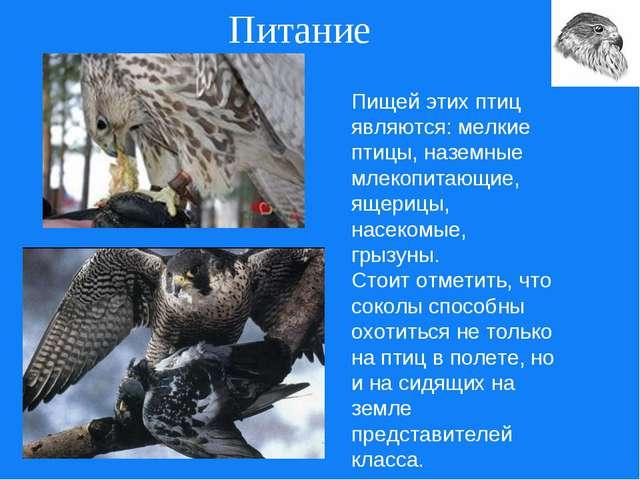 Питание Пищей этих птиц являются: мелкие птицы, наземные млекопитающие, ящери...