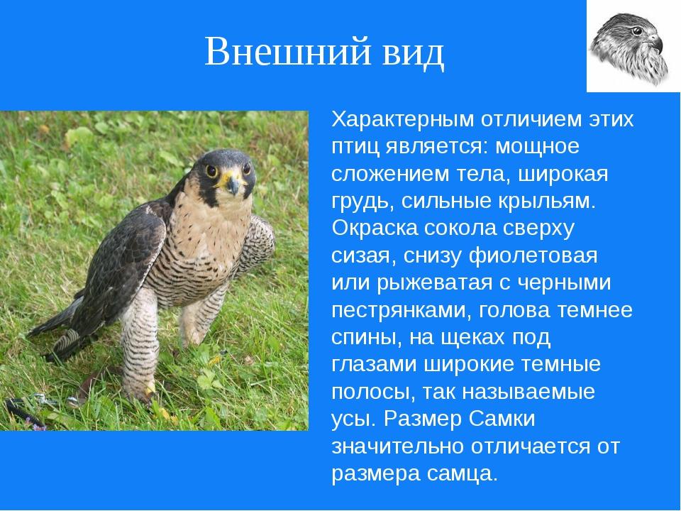 Внешний вид Характерным отличием этих птиц является: мощное сложением тела, ш...