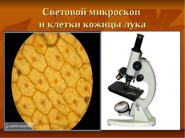 Световой микроскоп и клетки кожицы лука