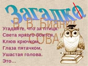 Угадайте, что за птица: Света яркого боится, Клюв крючком, Глаза пятачком, Уш