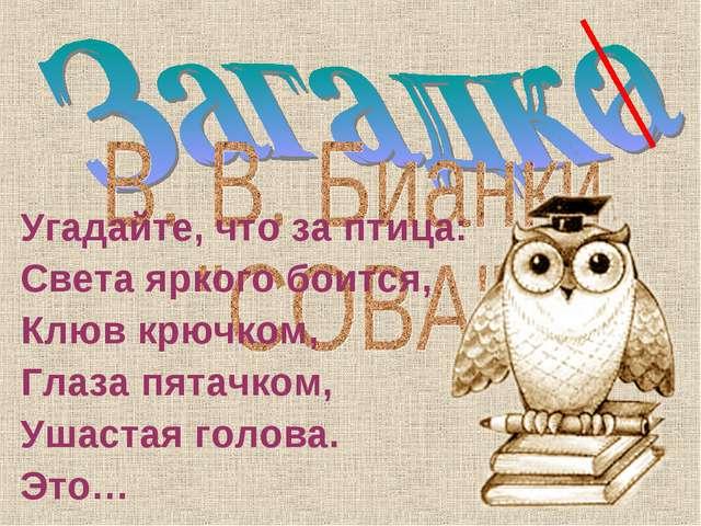 Угадайте, что за птица: Света яркого боится, Клюв крючком, Глаза пятачком, Уш...