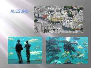 ALESUND It is a very beautiful city on the sea shore with the wonderful museu