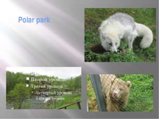 Polar park Actually it is not the Zoo. The areas are so large that it's diffi