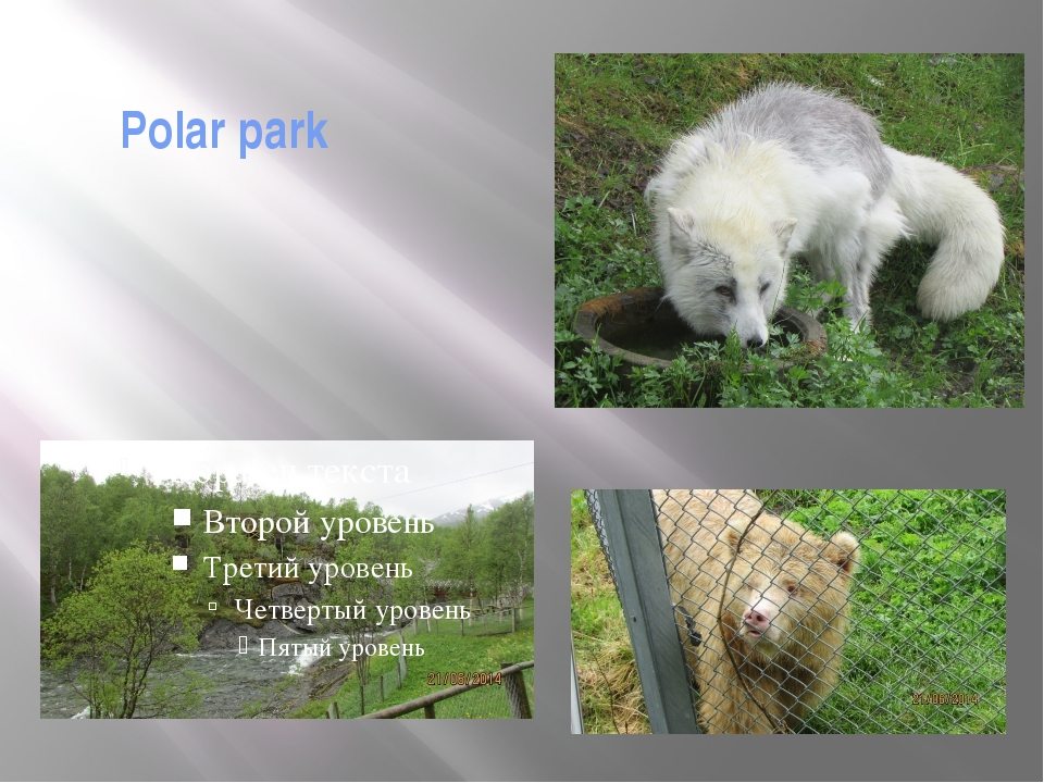 Polar park Actually it is not the Zoo. The areas are so large that it's diffi...