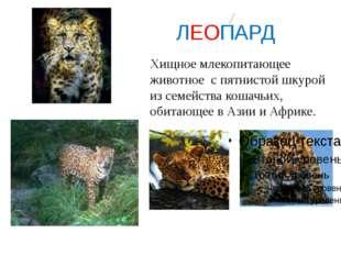ЛЕОПАРД Хищное млекопитающее животное с пятнистой шкурой из семейства кошачь