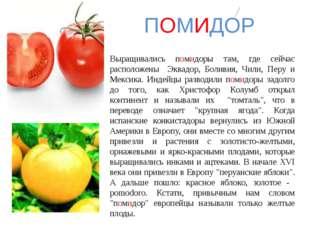 Выращивались помидоры там, где сейчас расположены Эквадор, Боливия, Чили, Пер