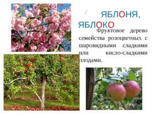 ЯБЛОНЯ, ЯБЛОКО Фруктовое дерево семейства розоцветных с шаровидными сладкими