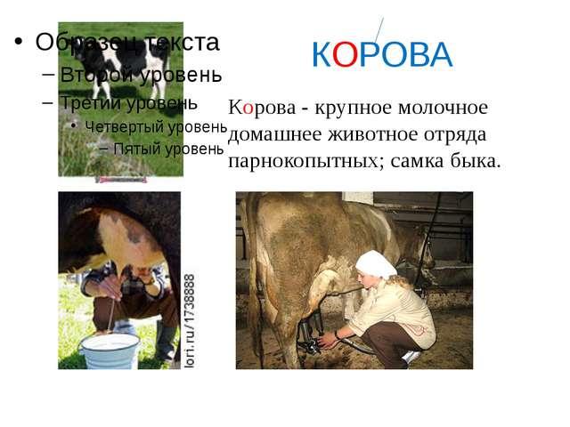 КОРОВА Корова - крупное молочное домашнее животное отряда парнокопытных; сам...