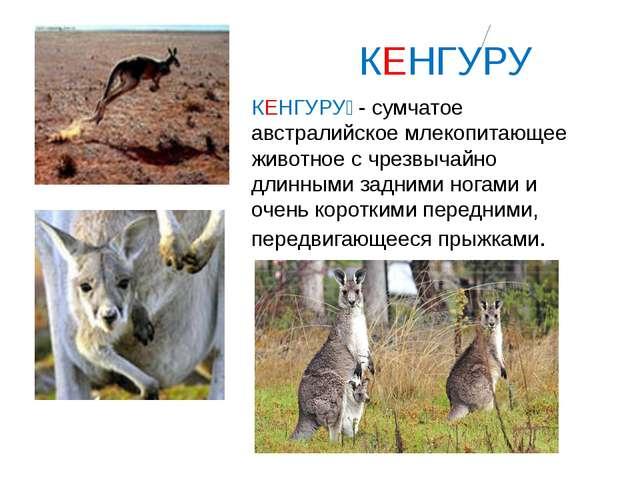 КЕНГУРУ КЕНГУРУ́ - сумчатое австралийское млекопитающее животное с чрезвычай...