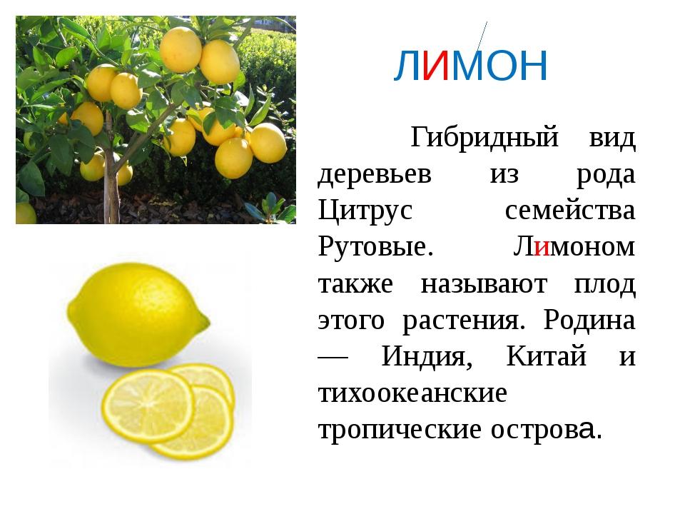 ЛИМОН Гибридный вид деревьев из рода Цитрус семейства Рутовые. Лимоном также...