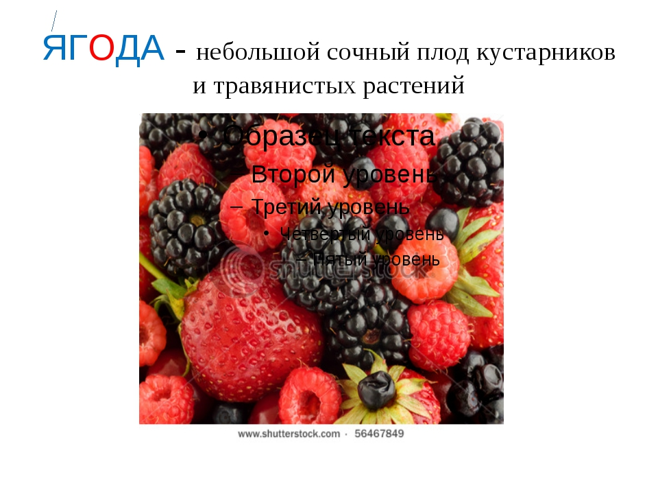 ЯГОДА - небольшой сочный плод кустарников и травянистых растений