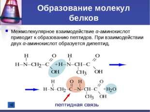 Образование молекул белков Межмолекулярное взаимодействие α-аминокислот приво