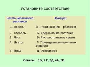 Установите соответствие Ответы: 1Б, 2 Г, 3Д, 4А, 5В Часть цветкового растения