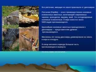 Все рептилии, живущие на земле произошли от динозавров. Рептилии (Reptilia)—