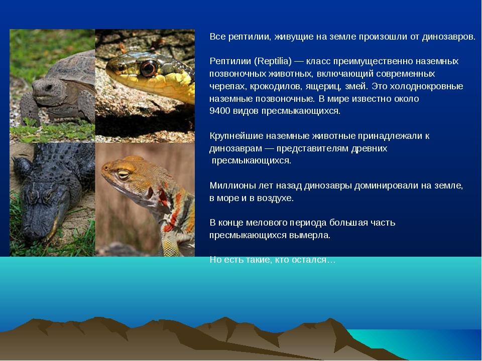 Все рептилии, живущие на земле произошли от динозавров. Рептилии (Reptilia)—...