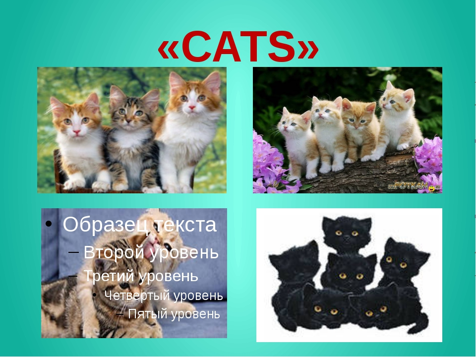 «CATS»