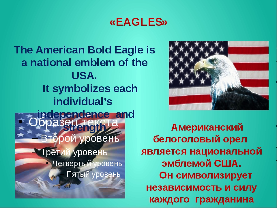 «EAGLES» The American Bold Eagle is a national emblem of the USA. It symboliz...