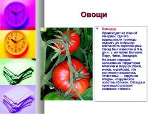 Овощи Помидор Происходит из Южной Америки, где его выращивали туземцы задолго