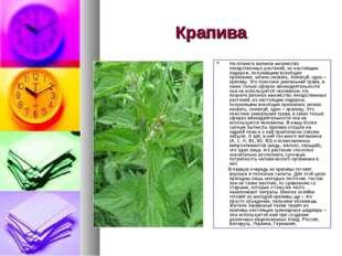 Крапива На планете великое множество лекарственных растений, но настоящим лид