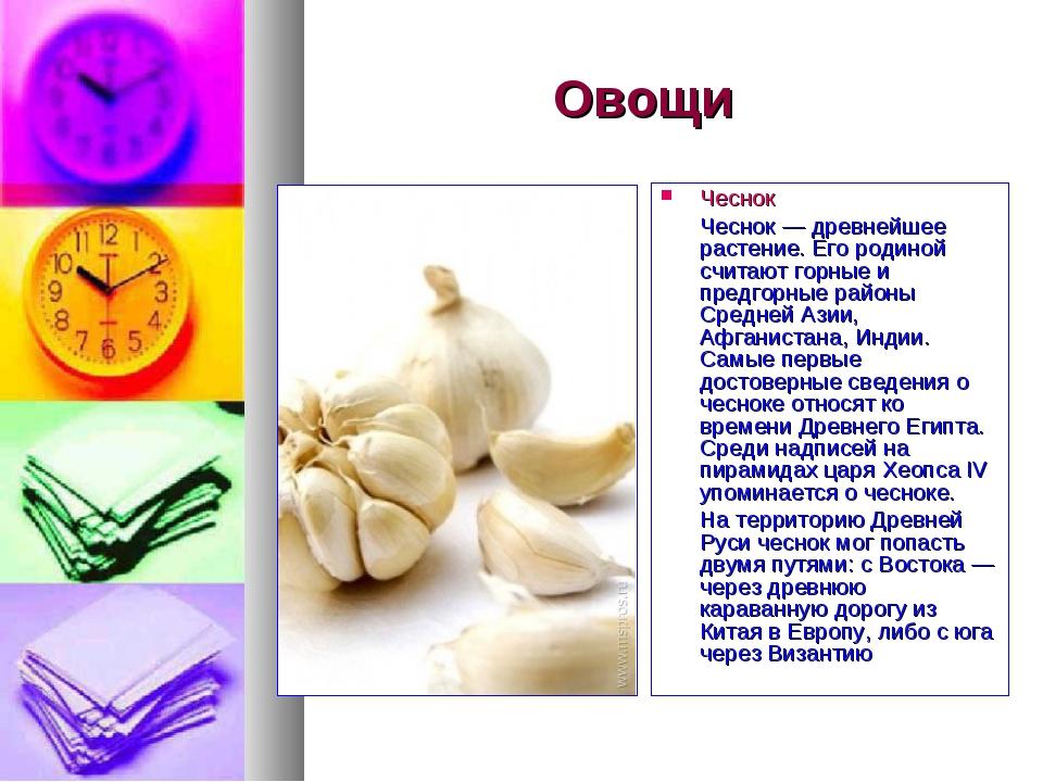 Овощи Чеснок Чеснок — древнейшее растение. Его родиной считают горные и предг...